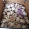 2020 China Shang Fresh Purple Garlic Suppliers Spice World Garlic China