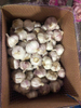 2020 Chinese fresh garlic bulbs for sale purple garlic suppliers
