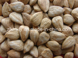 Sweet Almond (longwangmao 700 PCS/500g)