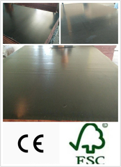 Chinese Local Black Film Faced Plywood Poplar Core (HB116)