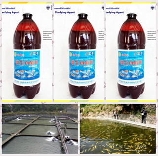 seaweed bio organic preparate used for purifying the aquaculture water