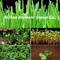 Seaweed Fertilizer with Amino Acid for Plants Growth