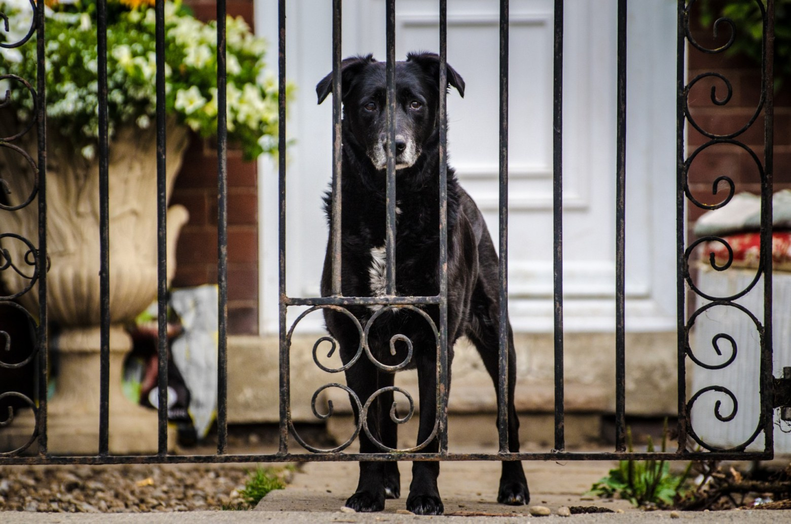 4 Ways Your Home Security is Endangering Your Pet