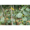 HDPE/PP 8gsm green color planting net/plant support net