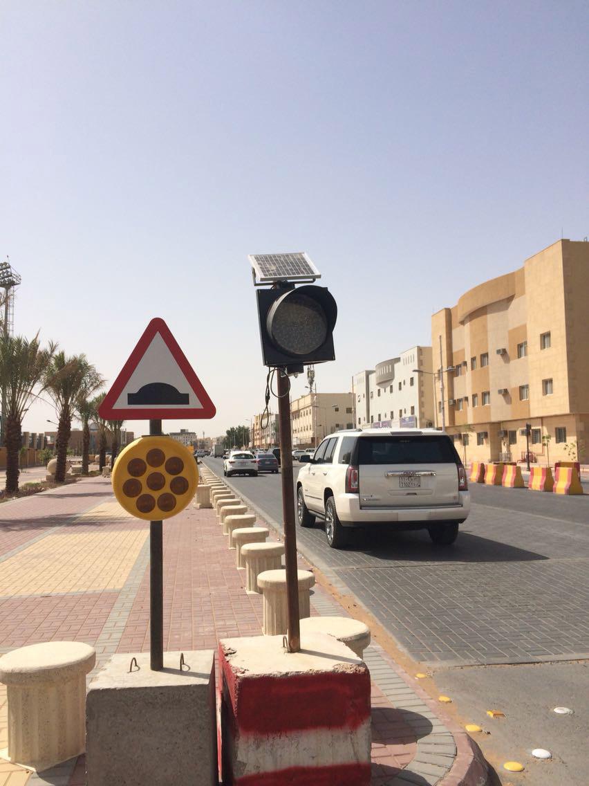 sunflower-light-in-Saudi.jpg