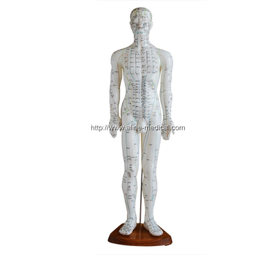Acupuncture Model 60CM