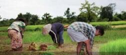 India agricultural growth has to be export driven for doubling farmers' income